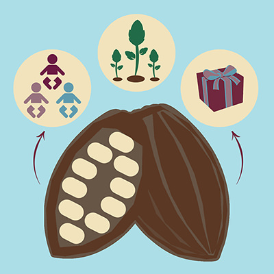 Choc affair chocolate. Aztec Mayan History. Cocao Bean