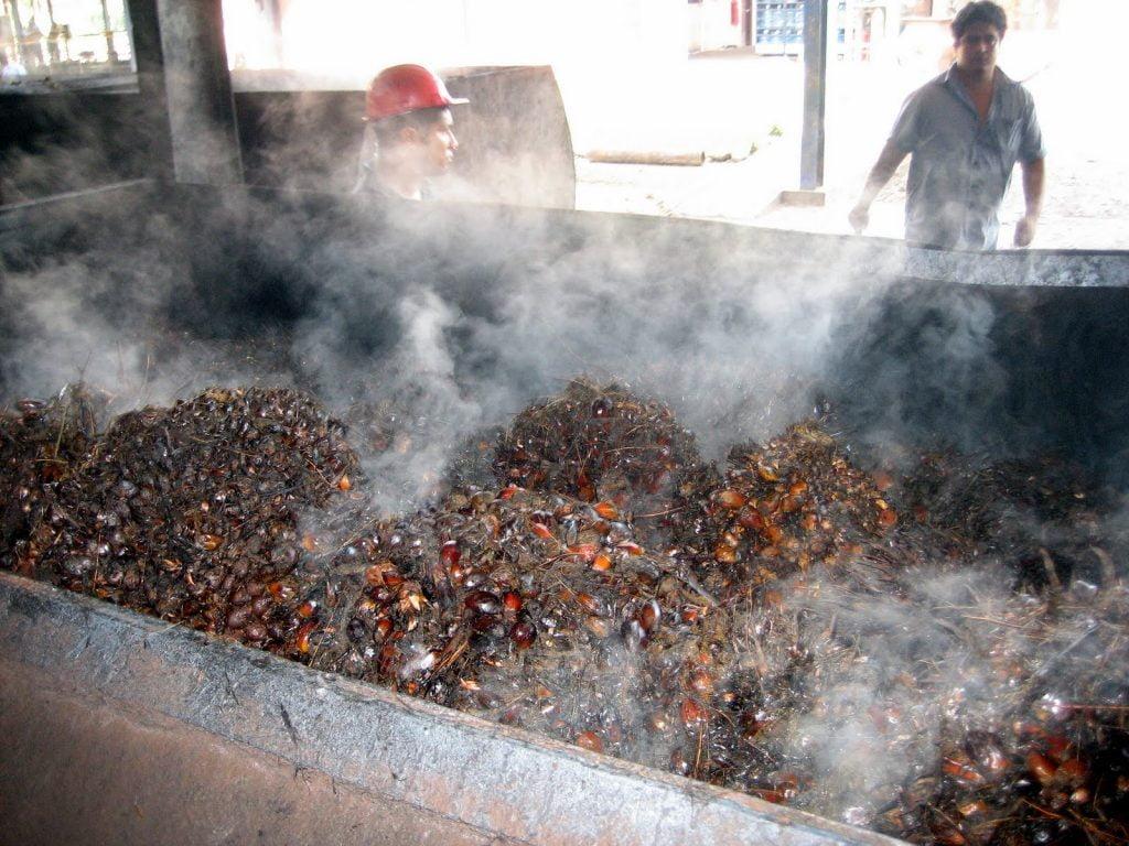 Palm Oil Steam