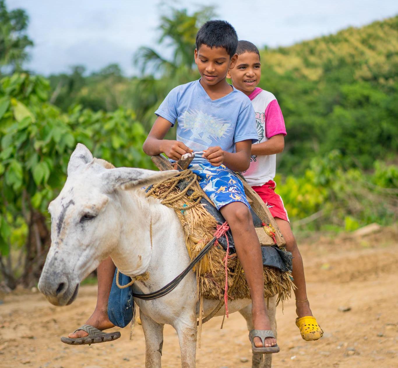 donkey ride the chocolate dream
