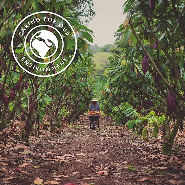 We care for the environment, including supporting rural cocoa farming communities. Pictures shows a cocoa farmer working at his farm surrounded by cocoa trees and cocoa pods.